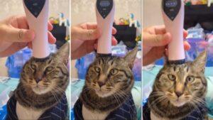 Gatinho se rende a massageador de cabeça e tem reação hilária