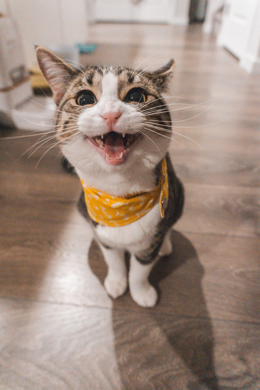 teste de DNA gatos