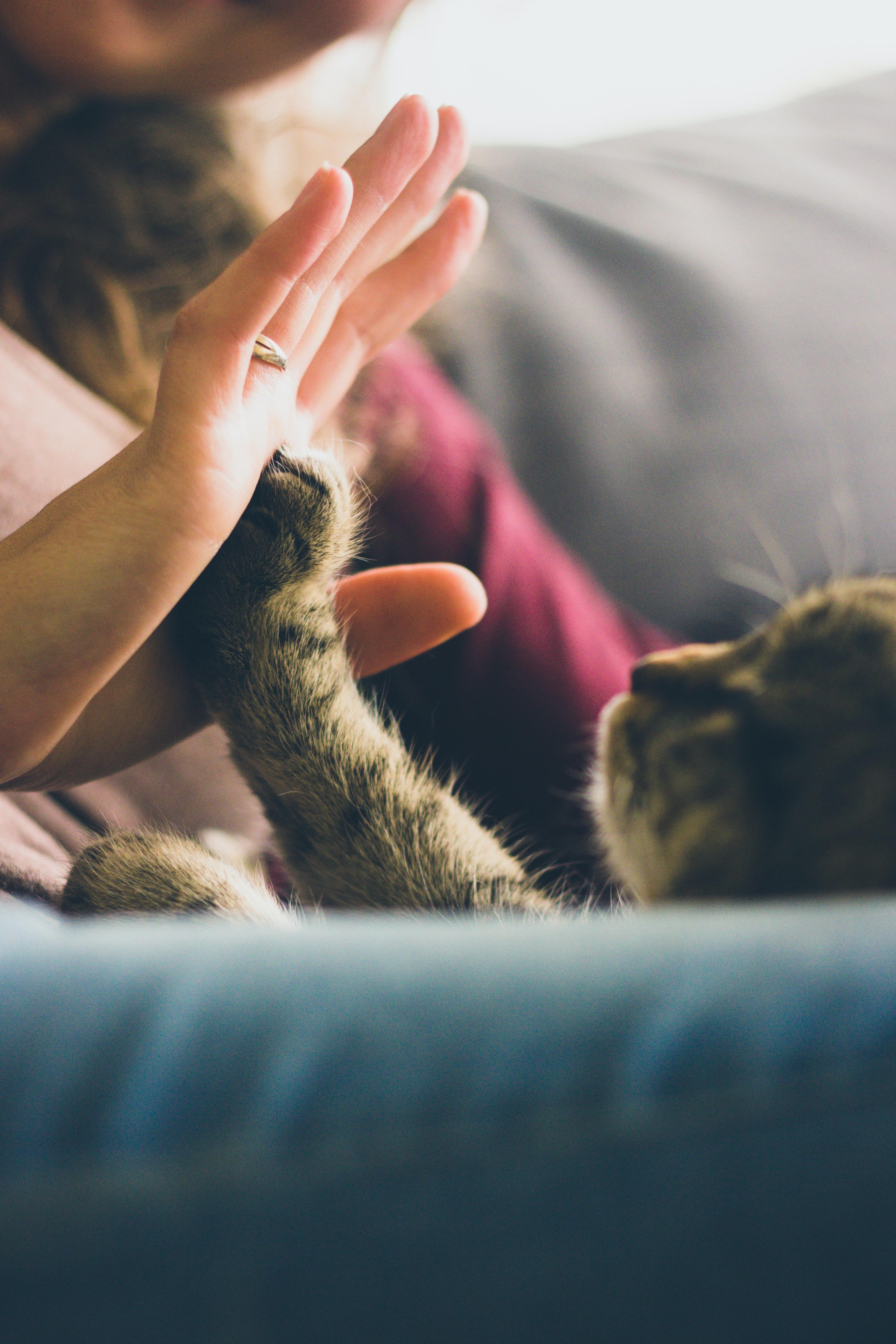 doenças felinas mais comuns
