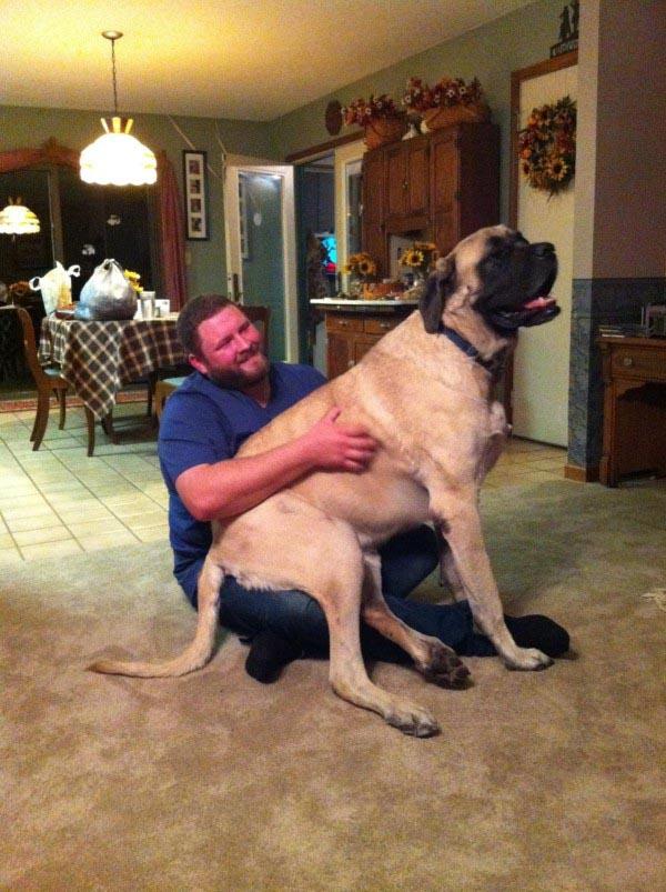 raças de cachorros grandes