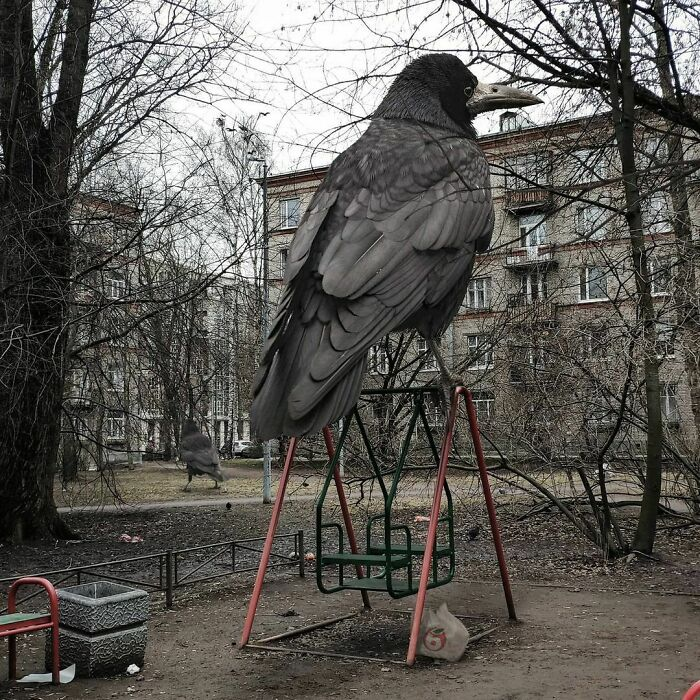 corvo gigante