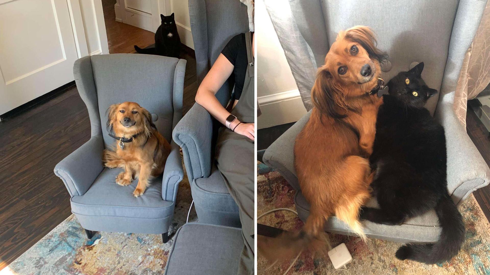 Cachorro não para de sorrir ao ganhar cadeira igual à da mamãe humana
