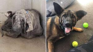 Cachorro parecia uma estátua de pedra antes de transformação incrível