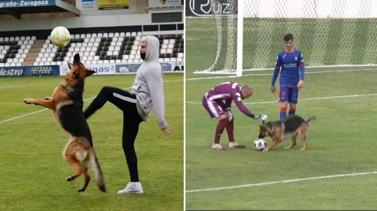 Cadela apaixonada por futebol invade jogo para mostrar suas habilidades