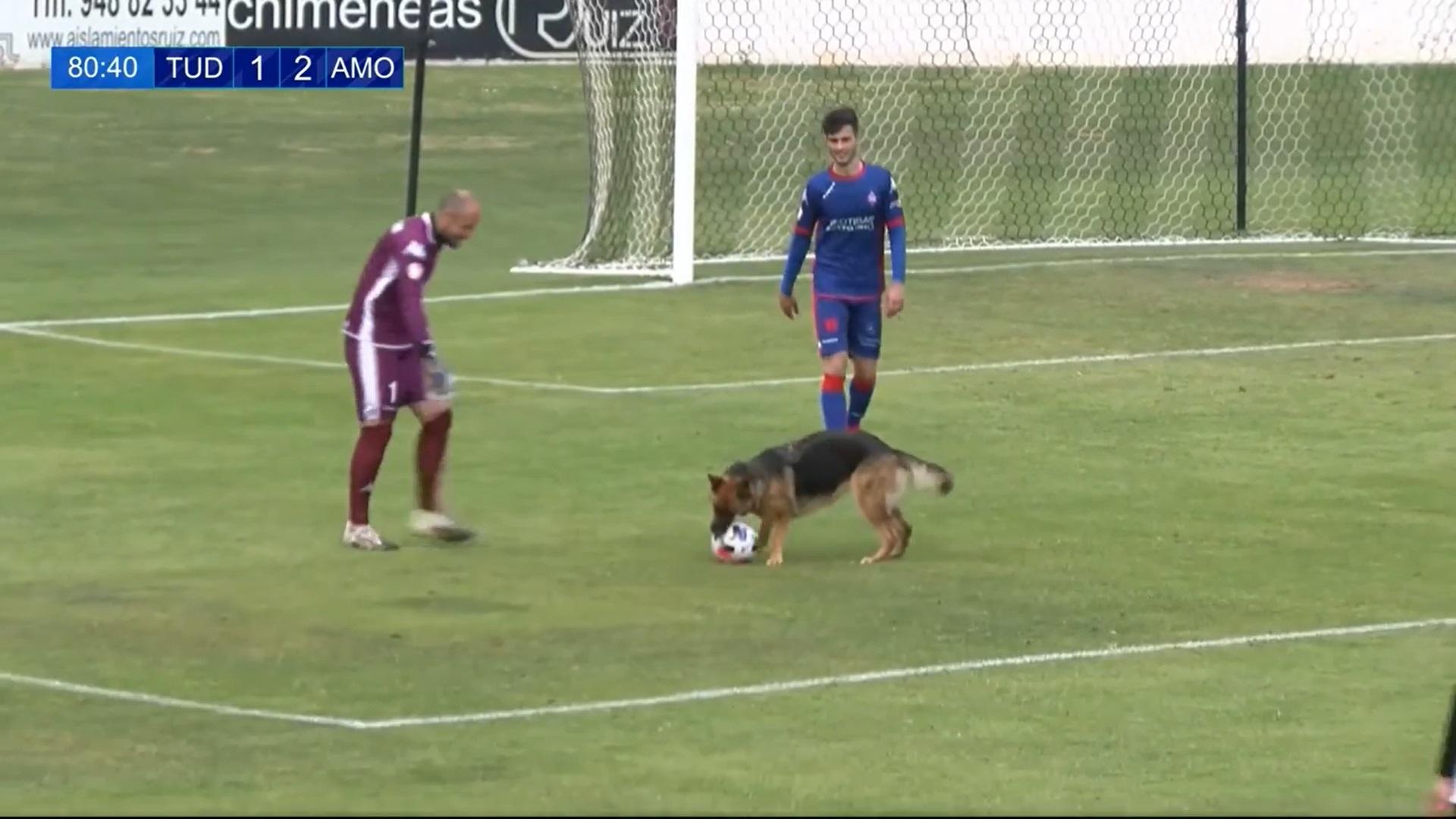 Cadela apaixonada por futebol invade jogo para
