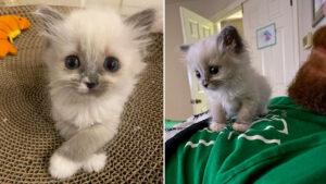 Esse gatinho fofo ganha o coração de 100% das pessoas que o encaram