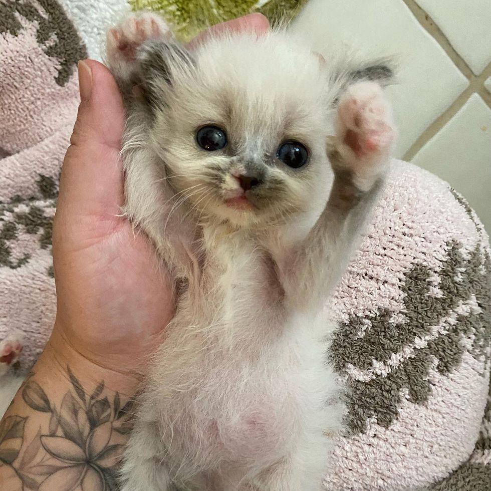 Esse gatinho fofo ganha o coração todos