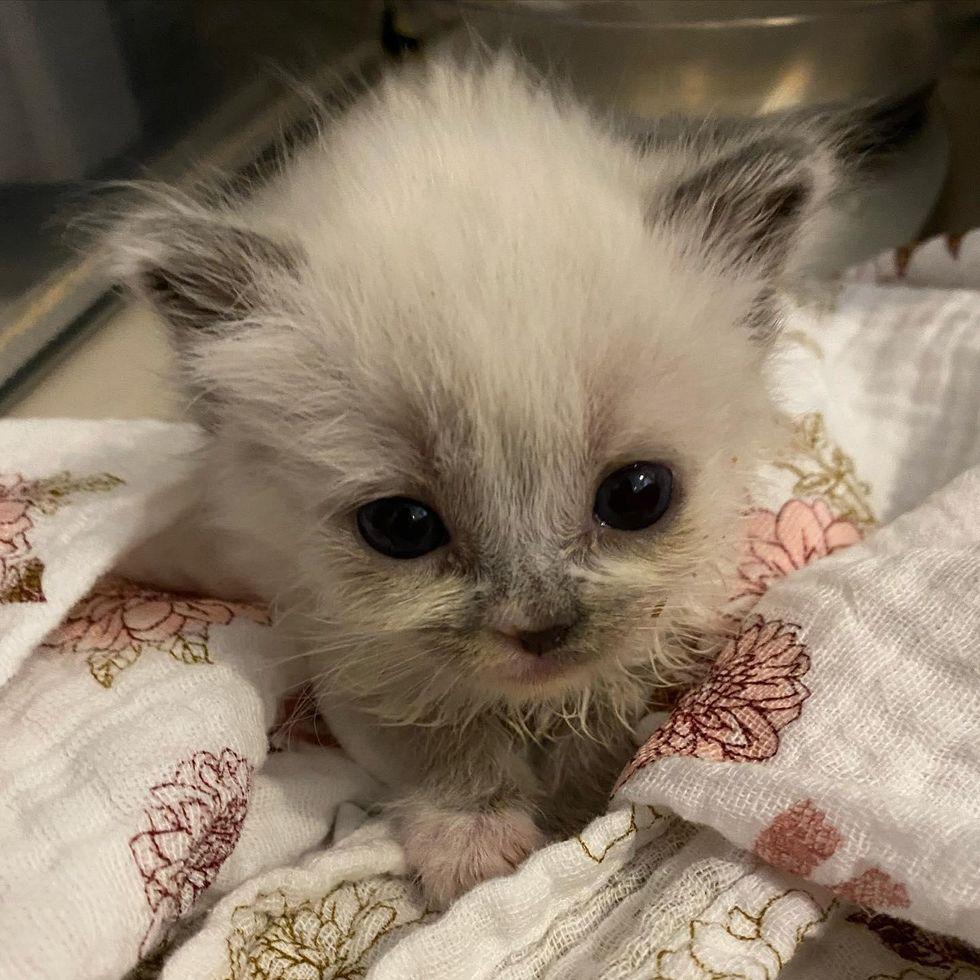 Esse gatinho fofo ganha o coração