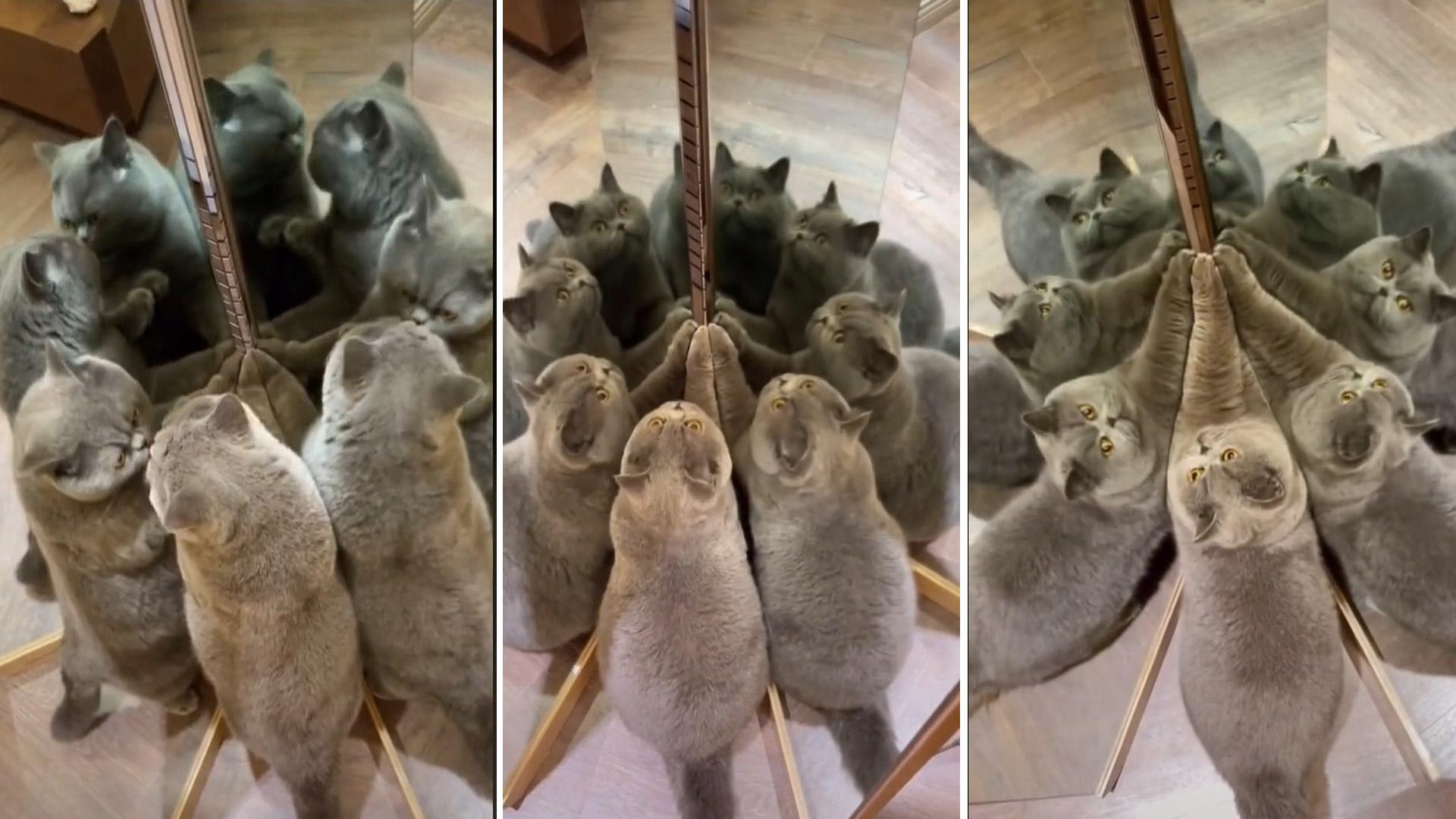 Esse gatinho invadiu uma sala de espelhos e multiplicou a fofura ao infinito