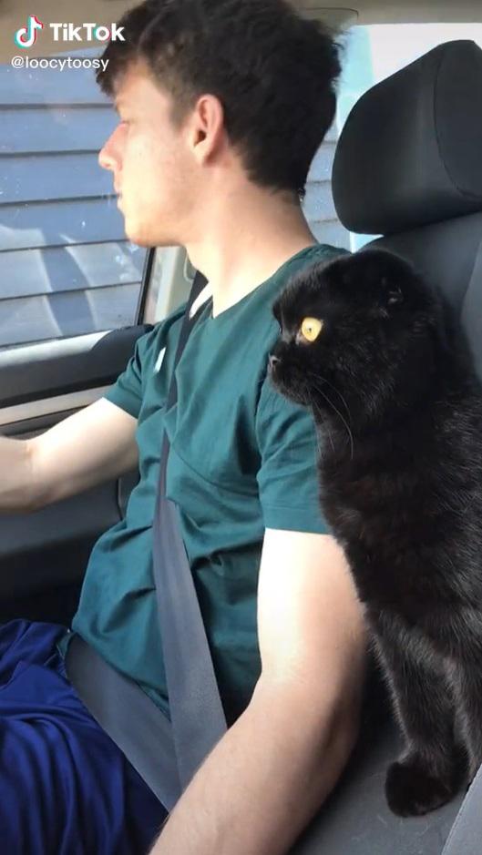 Esse gatinho não confia muito no dono quando ele está dirigindo