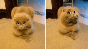 Filtro deixa gatinho com cara de desenho da Disney com precisão incrível