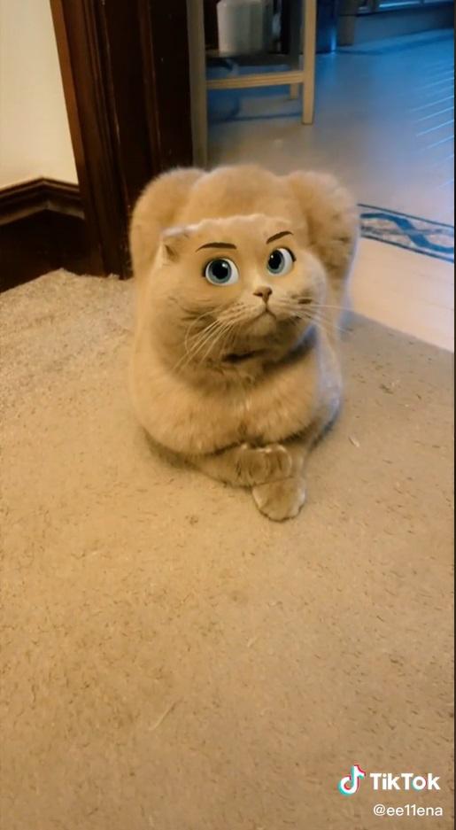 Filtro deixa gatinho com cara de desenho da Disney