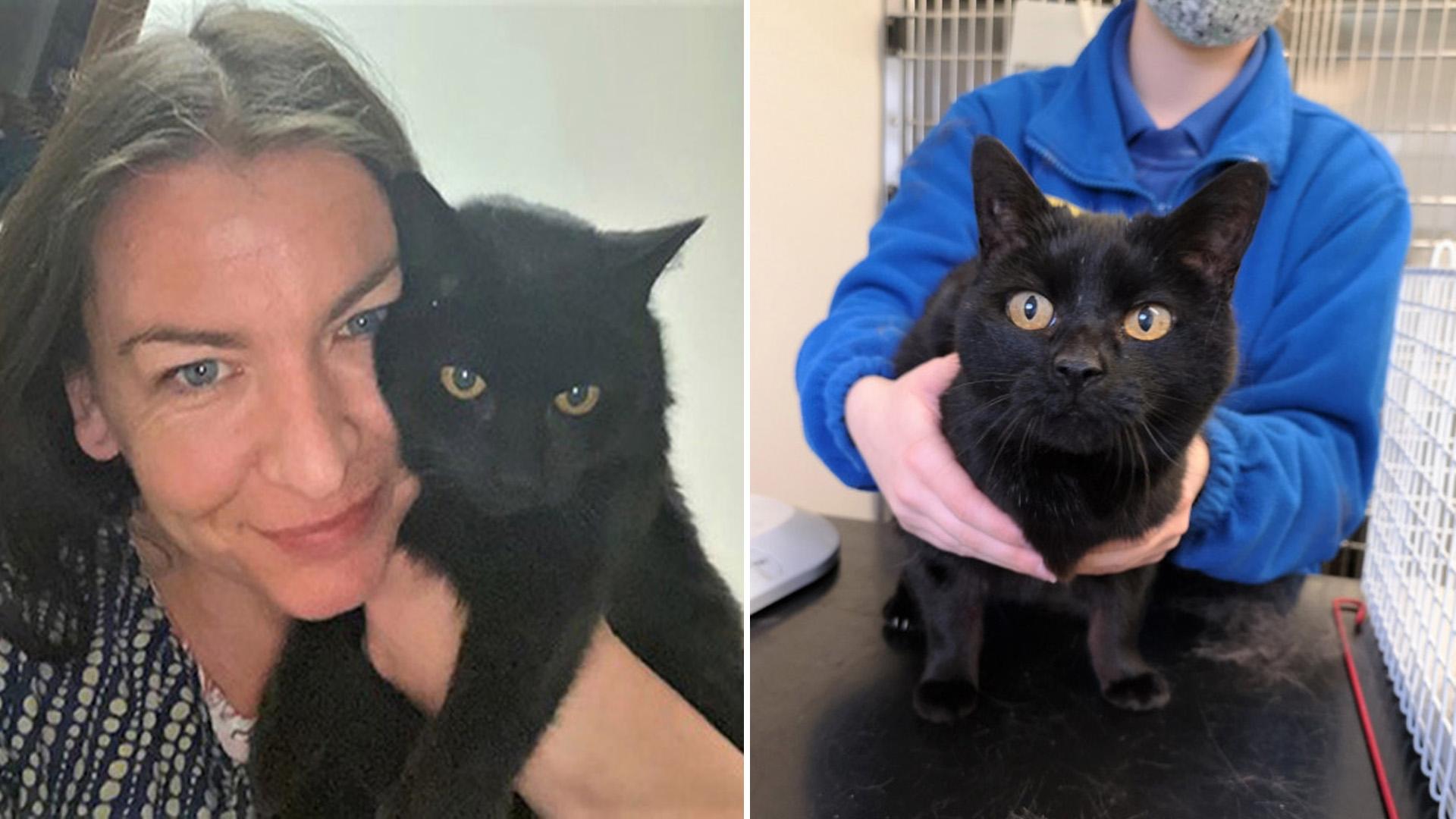 Gata reencontrou a dona após 13 anos e ronronou ao reconhecê-la