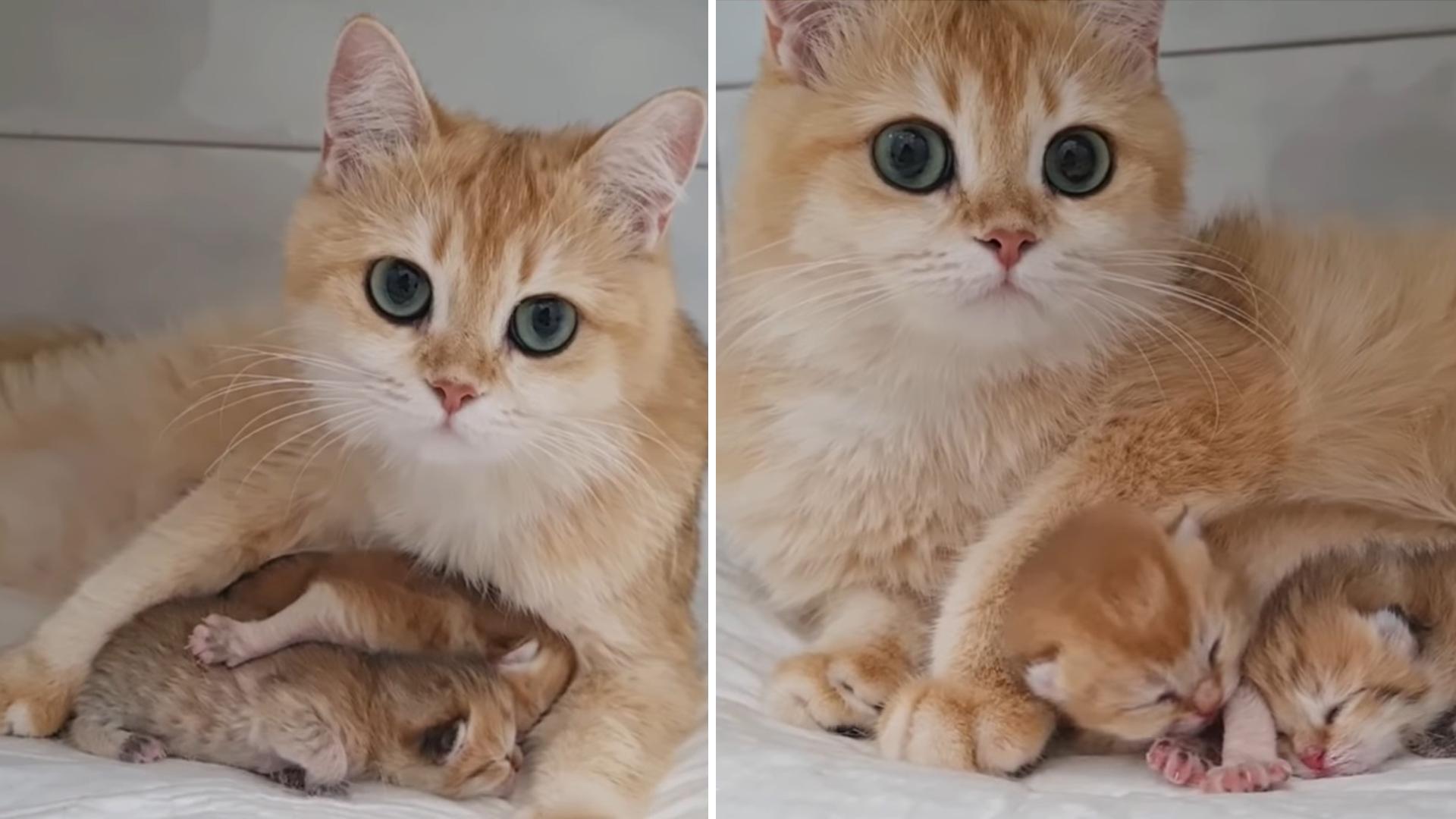 Gatinha com os olhos mais lindos do mundo está orgulhosa de seus bebês