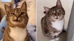 Gatinho com rosto assimétrico parece estar sempre fazendo caretas