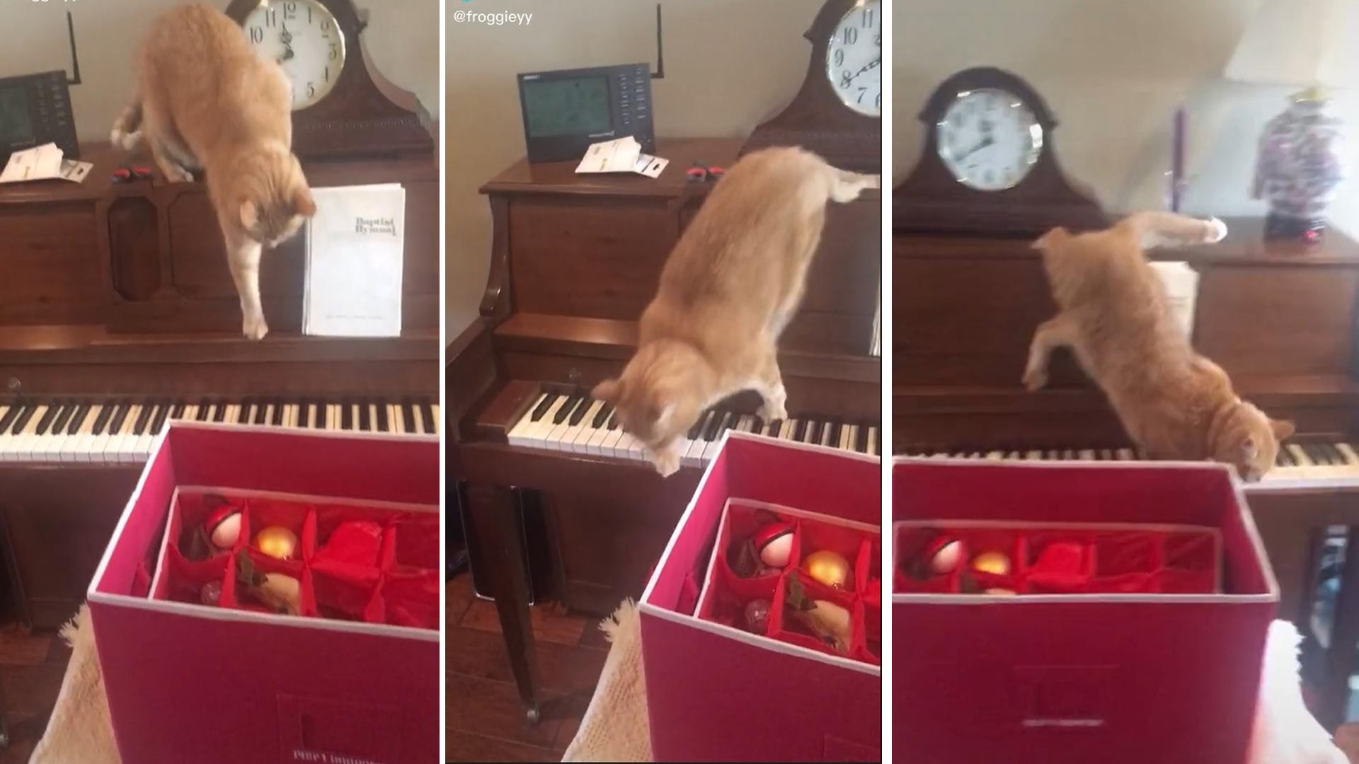 Gatinho descobre que não gosta de música da pior forma