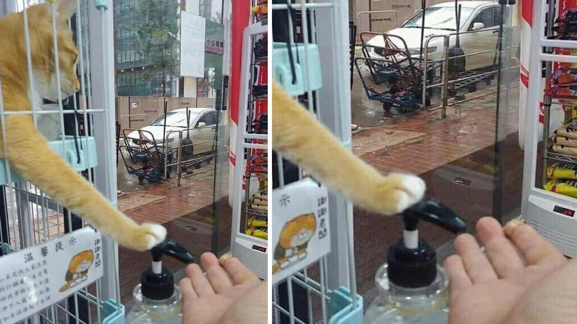 Gatinho ensina humanos a usar álcool em gel
