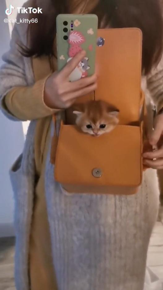Gatinho lindo e fofo surge de bolsa