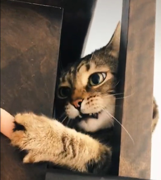 Gatinho percebe que ficou preso e reação dele é hilária