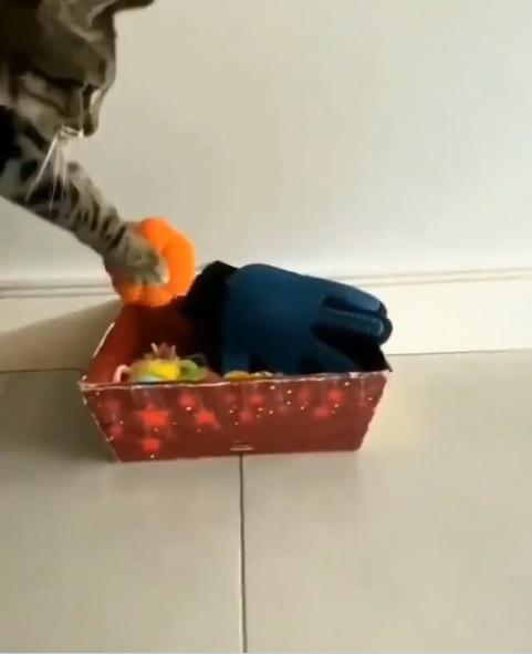 Gatinho que arruma a casa e lava a louça viraliza na internet