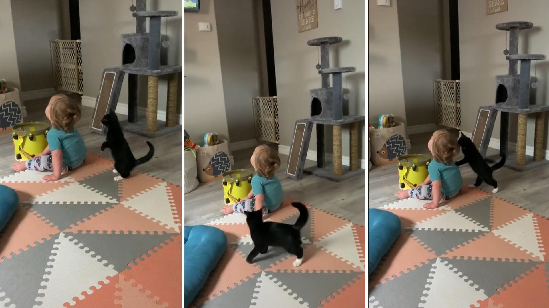 Gatinho tenta convencer bebê a brincar usando uma dança maluca