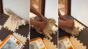 Gato com convulsões severas em vídeo que serve de alerta a donos