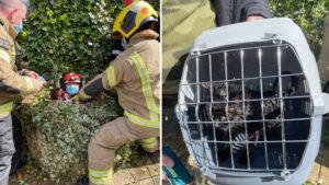 Gato foi resgatado com ajuda de cachorro após 10 dias preso em um poço