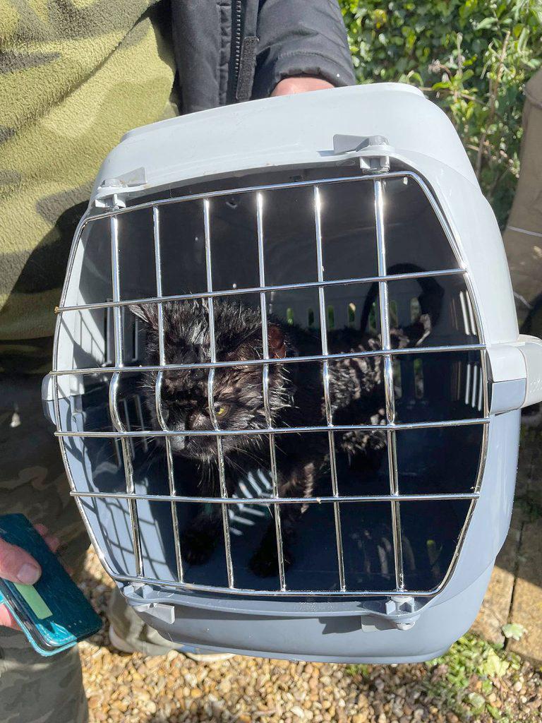 Gato foi resgatado com ajuda cachorro