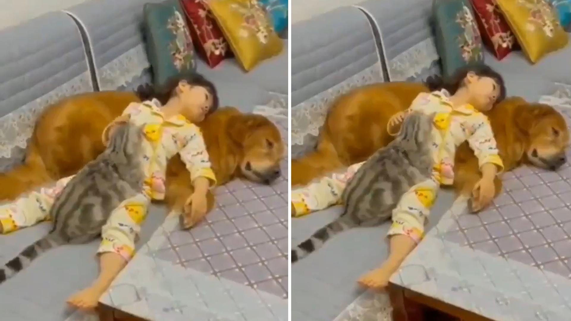 Momento lindo de carinho entre menininha e seus pets