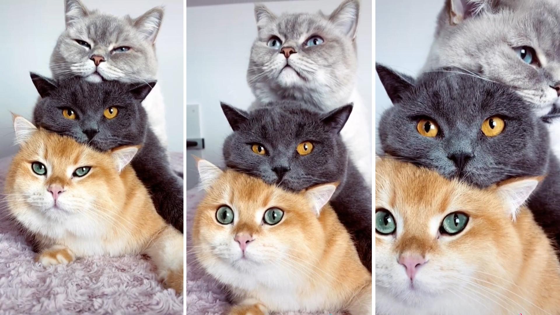 Nós amamos os gatinhos empilhados nesse vídeo lindo – e você?