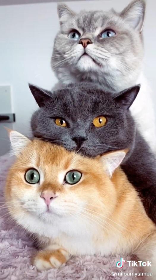 Nós amamos os gatinhos empilhados