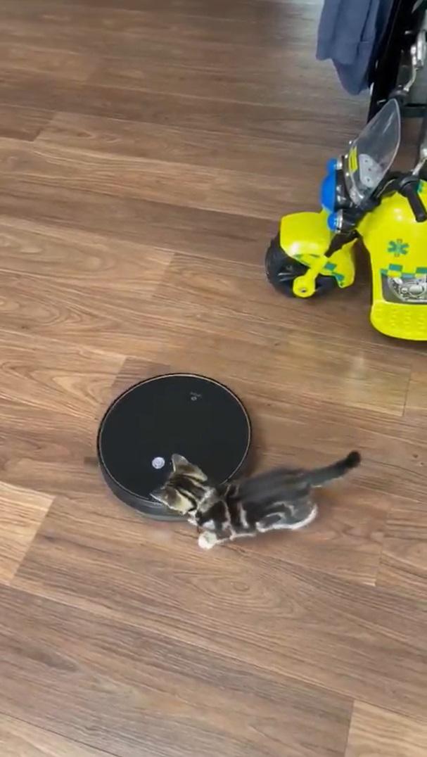O novo melhor amigo desse gatinho é um aspirador de pó robô