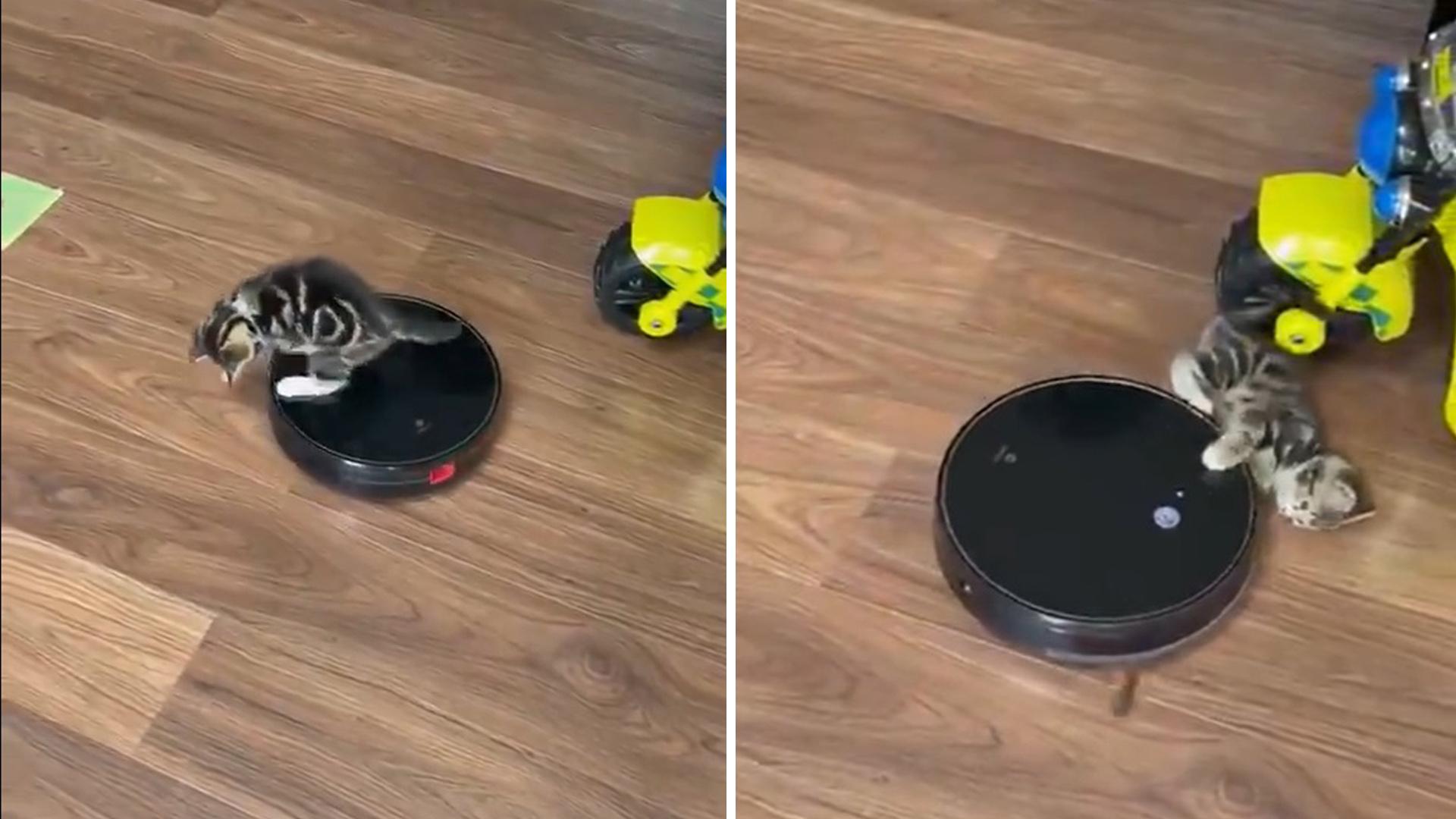 O novo melhor amigo desse gatinho