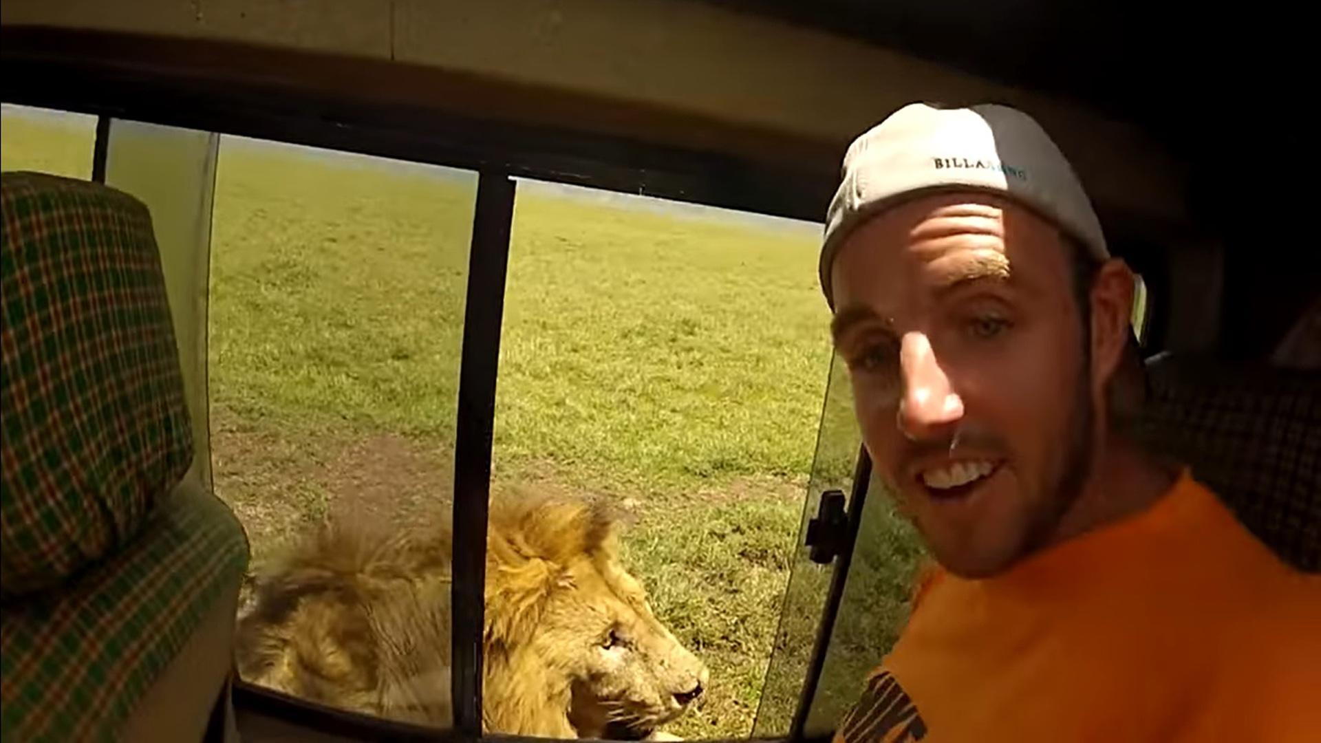 Turista tenta tocar leão durante passeio e toma susto que nunca esquecerá