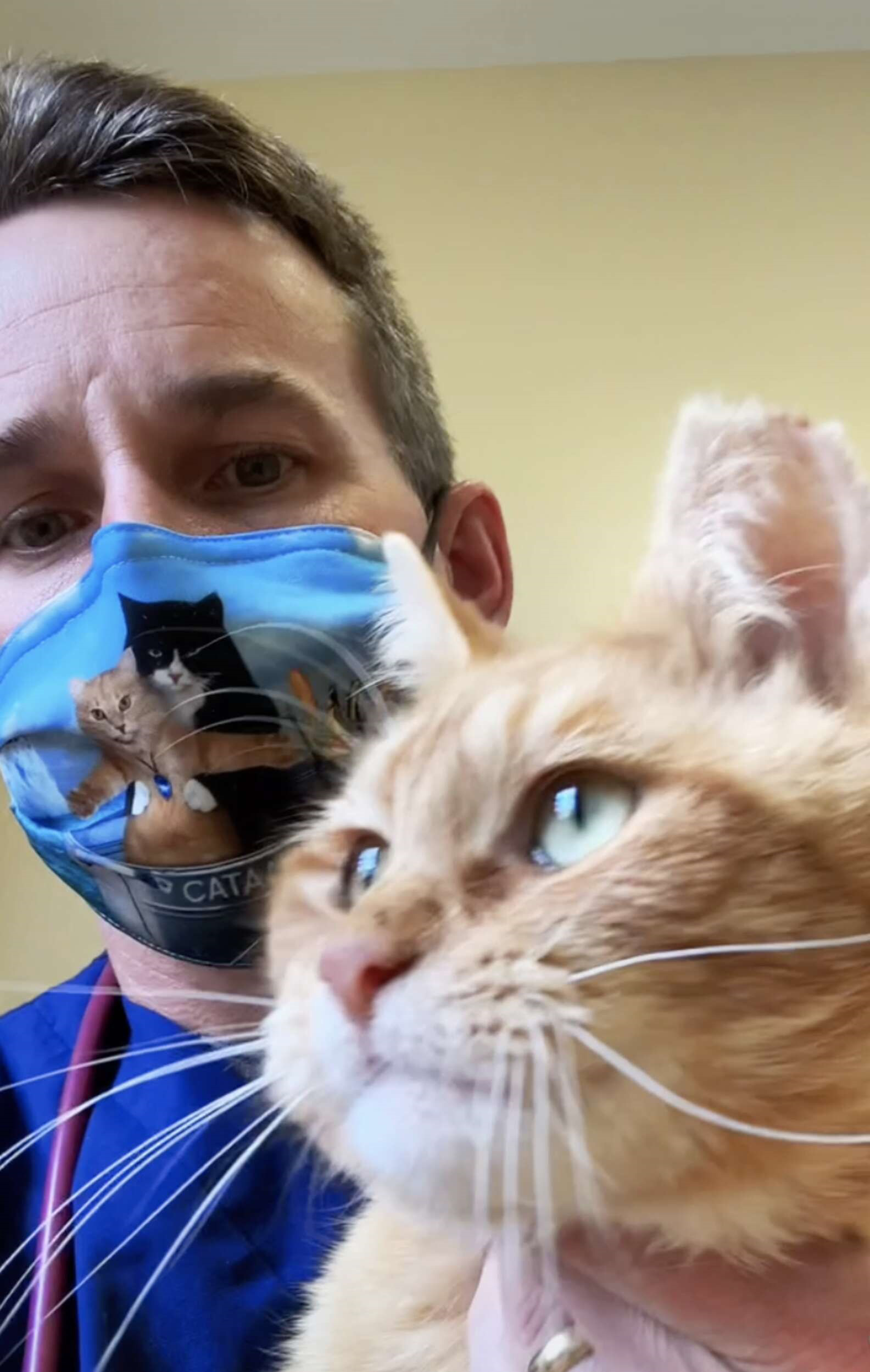 Veterinário salva gato que foi