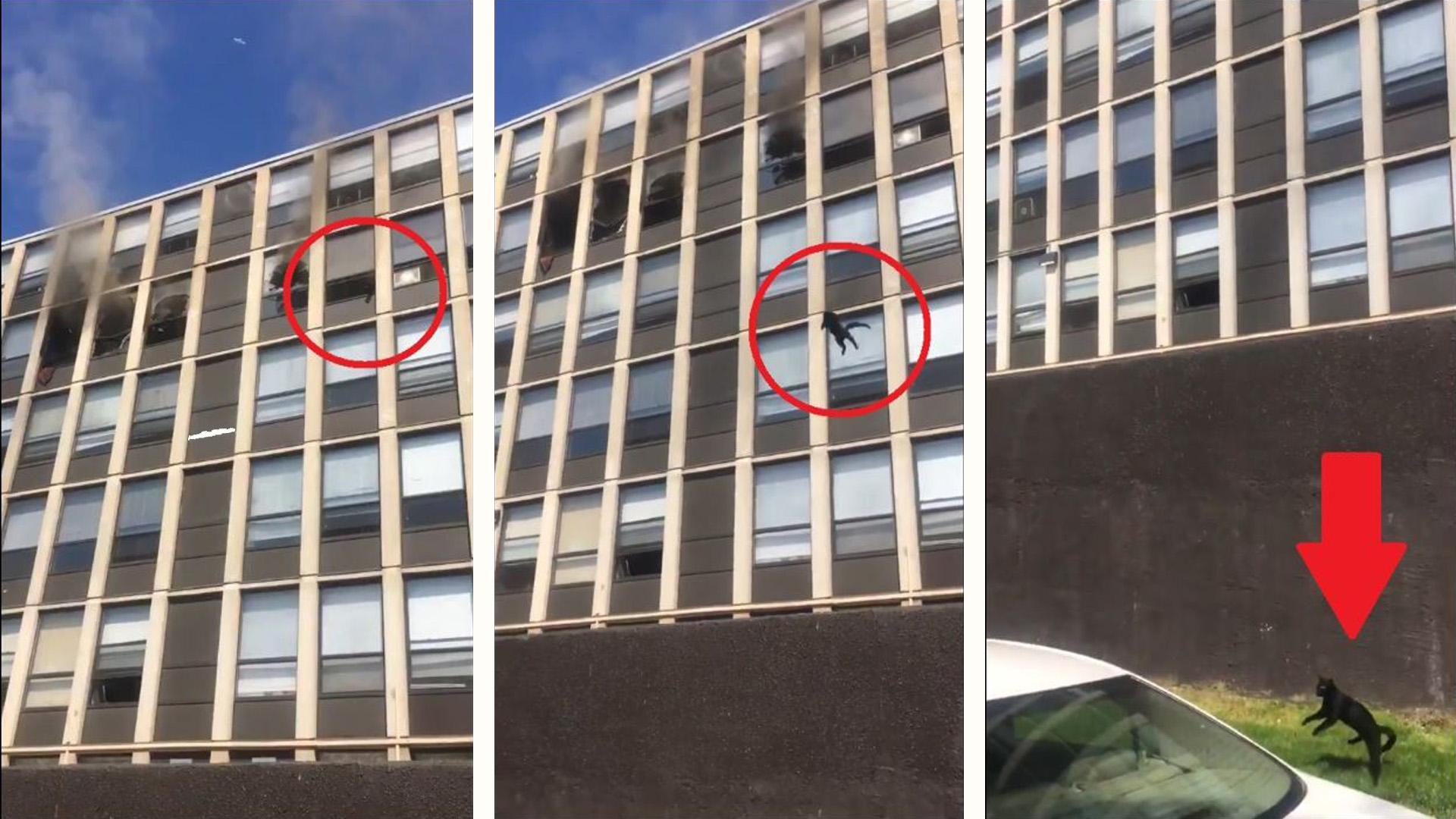 Vídeo mostra um gatinho pulando de prédio em chamas: ele sobreviveu