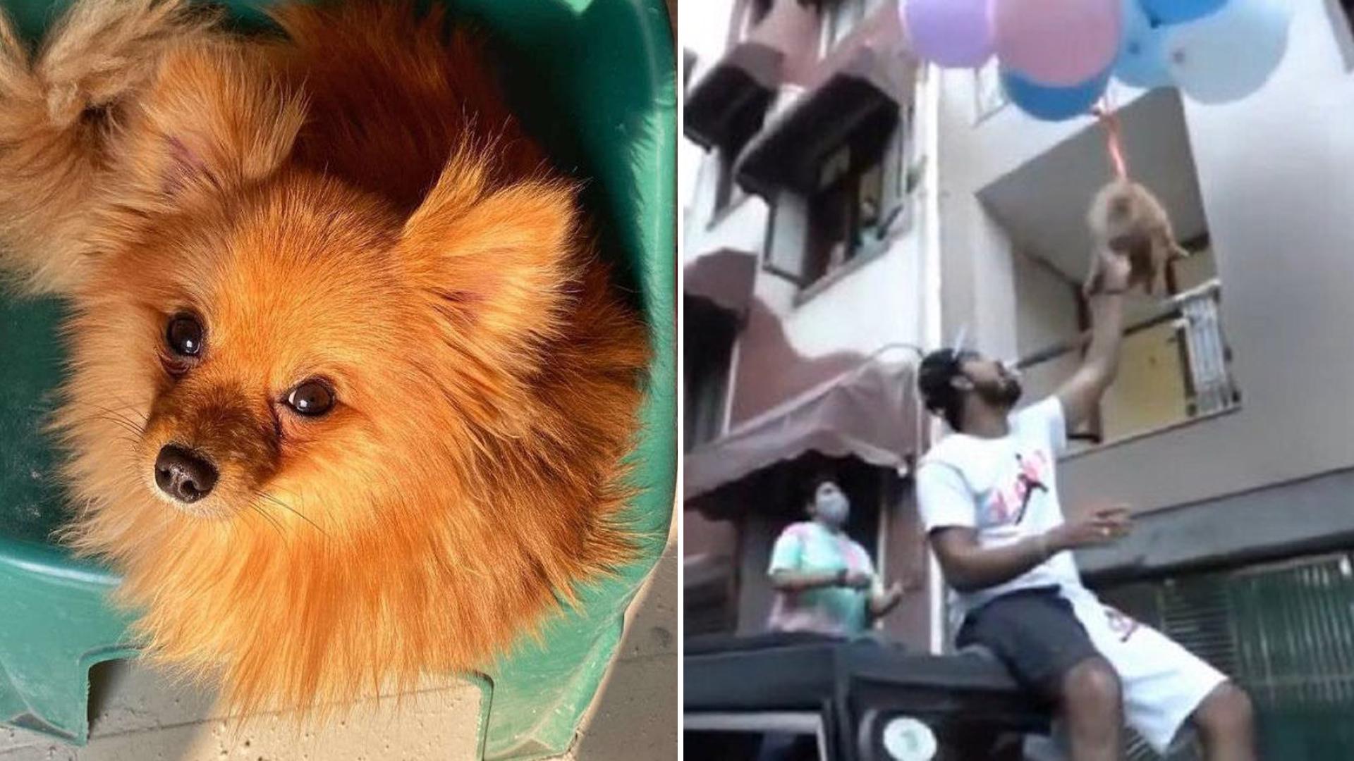 Youtuber foi preso por maus-tratos após vídeo com cachorrinho