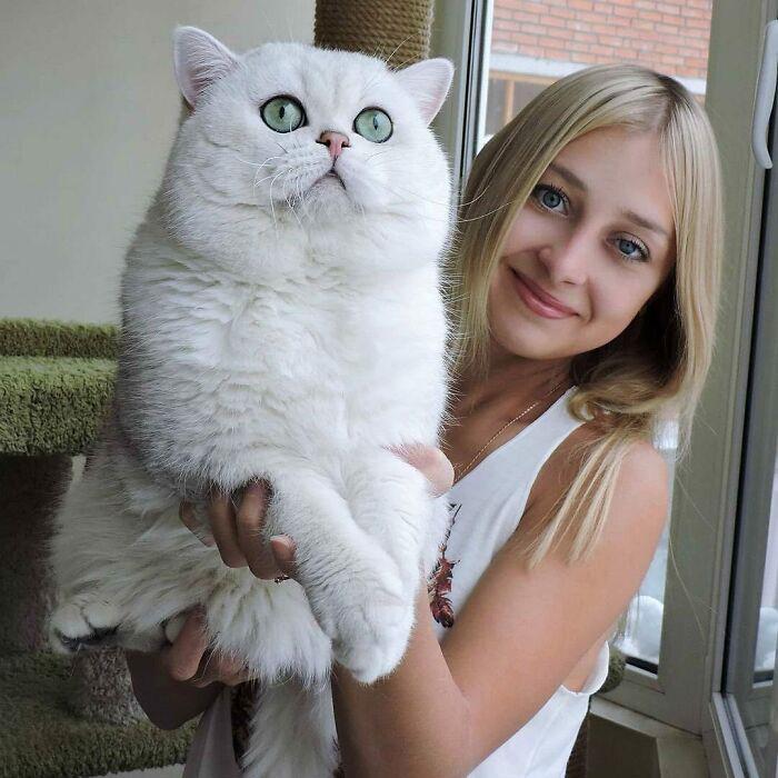 as maiores raças de gatinhos do mundo