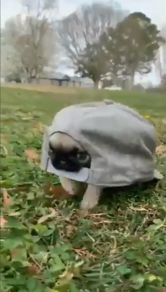 cachorrinho no boné vídeo