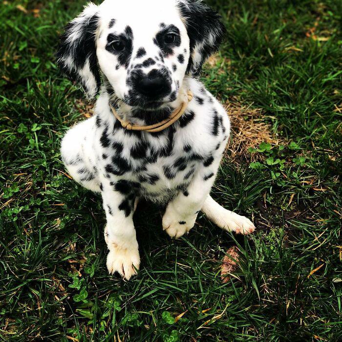 cachorros mais lindos