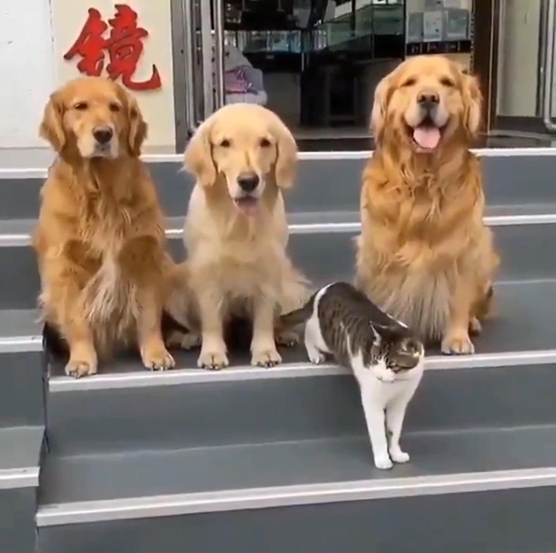 foto de família animais