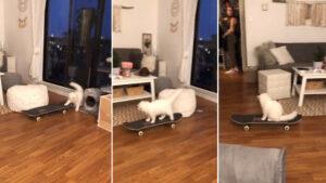 Gatinho aprende a andar de skate sozinho e dona não consegue acreditar