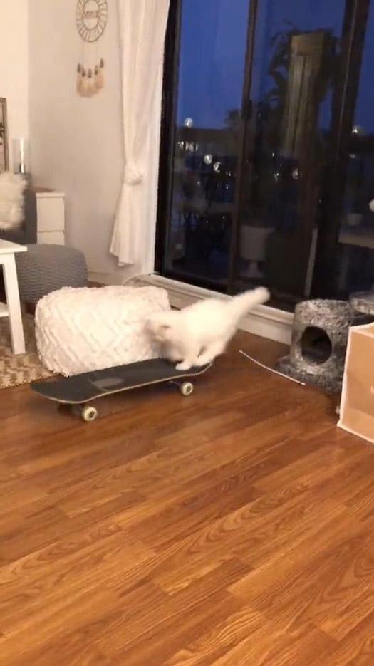 gatinho aprende a andar de skate sozinho