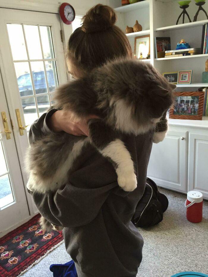 gatinhos fofos enormes