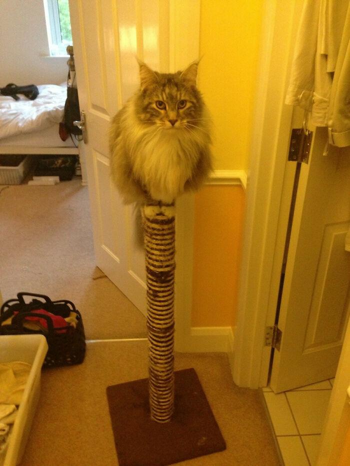 gatinhos gigantes fotos