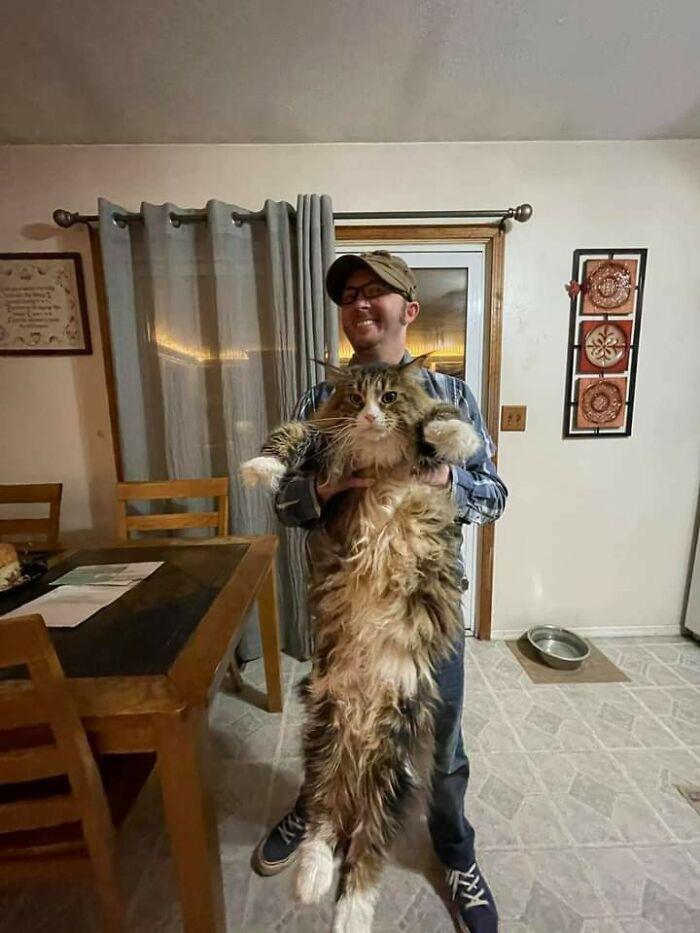 gatinhos maiores do mundo