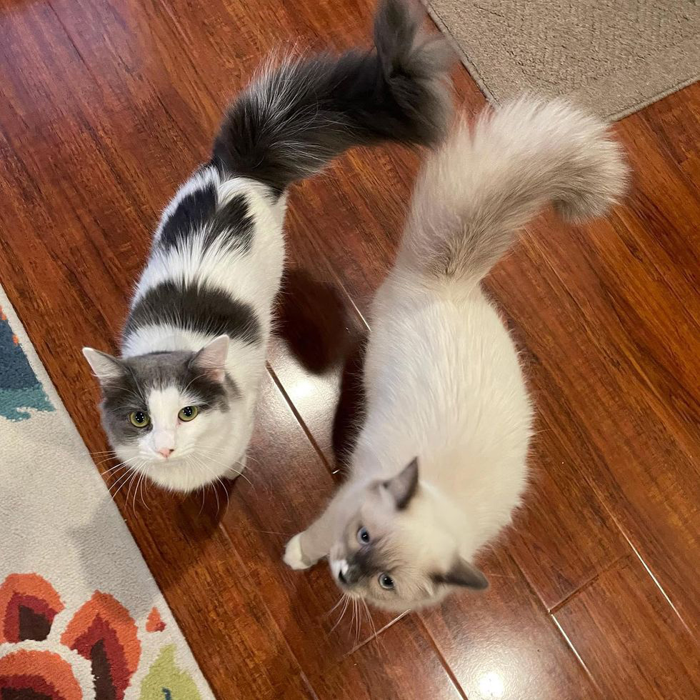gatos resgatados