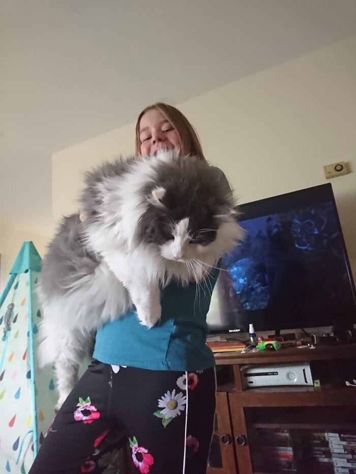 maiores gatinhos