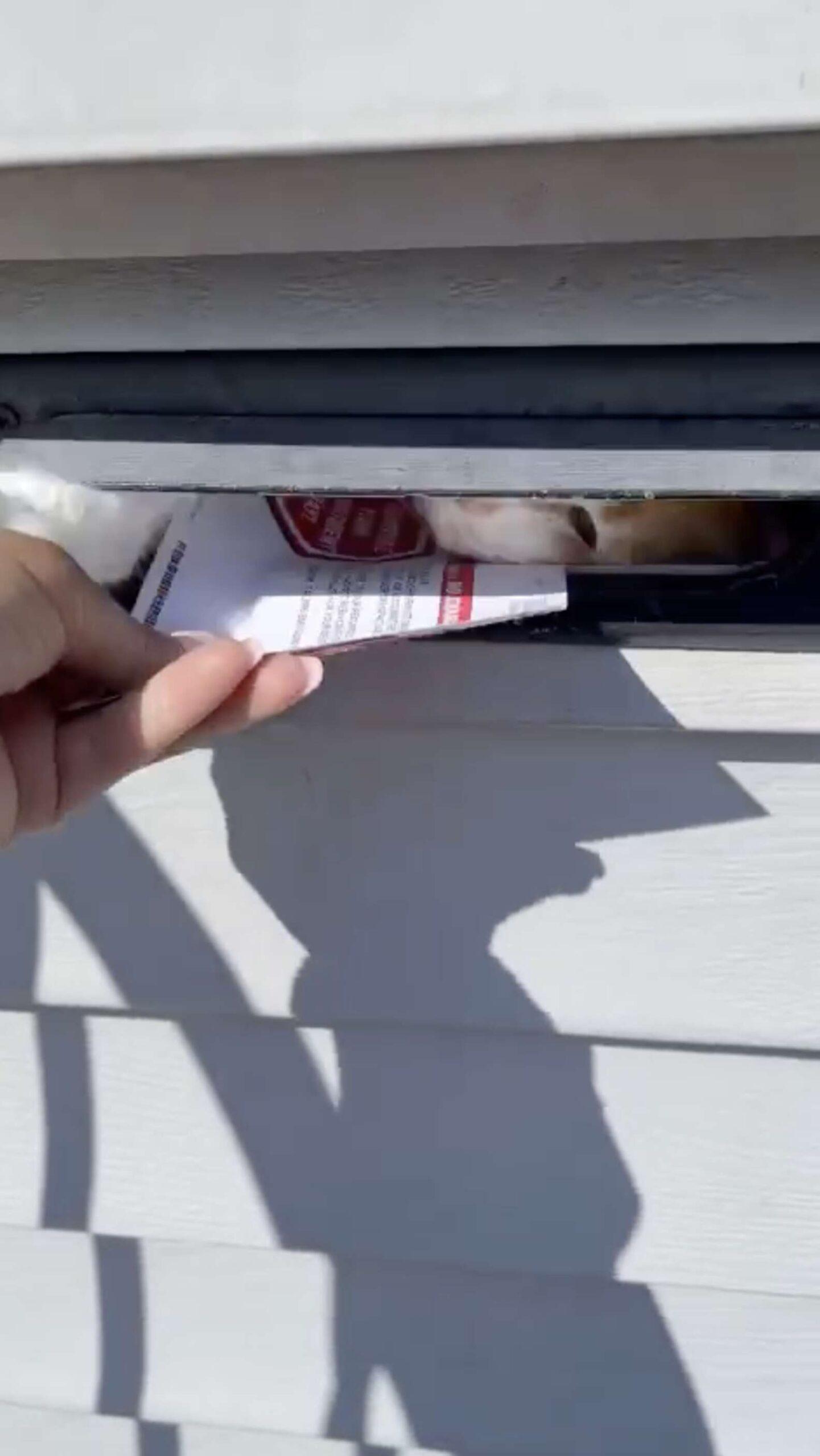 gatinho não deixa entregarem cartas