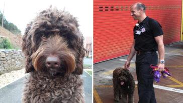 Cachorro terapeuta de bombeiros